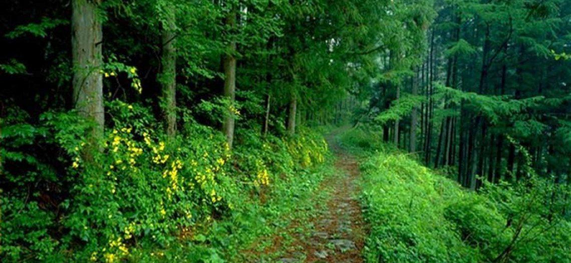 Ứng phó thế nào khi bị lạc trong rừng hoang