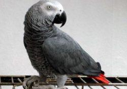 Loài chim nào thông minh nhất hành tinh?