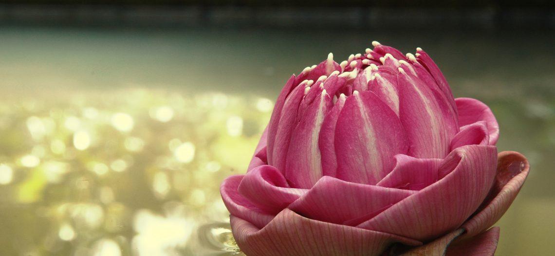 Hãy sống như một bông hoa
