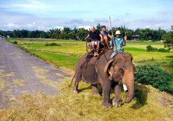 Về Đắk Lắk cưỡi voi đi dạo