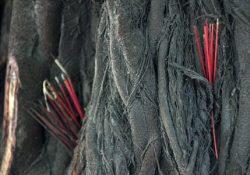 Cận cảnh những gốc bồ đề 'khủng' đường Hoàng Hoa Thám