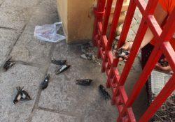 Rằm tháng 7 và tội ác chim phóng sinh