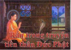 Rắn trong truyện tiền thân Đức Phật
