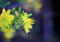 [Thơ] Xuân với Tình Lam – Hàn Phong